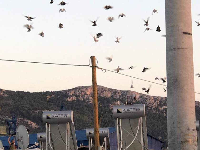 pigeons flying over skaramagas.jpg